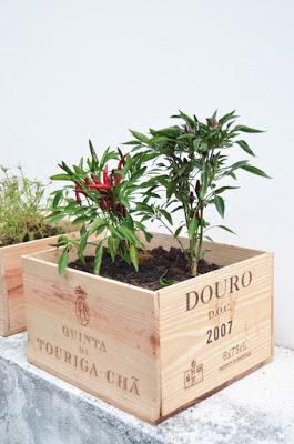 caixa de vinho usada para fazer hortas